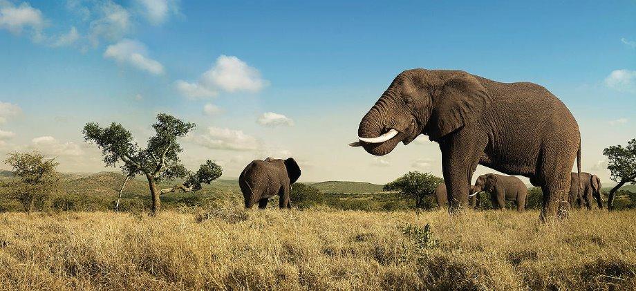 Elefant2.jpg